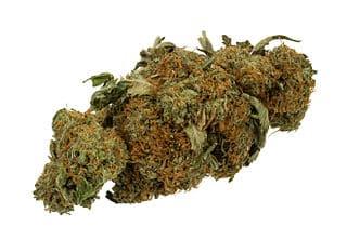 dried marijuana cannabis flower bud